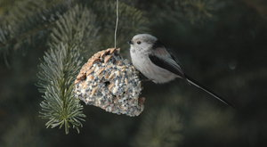 Ptačí krmítka: Voláme všechny pozorovatele ptáků!