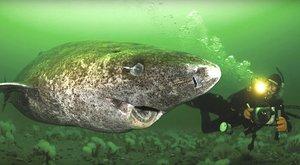 online datování více ryb wv věk datování zákony
