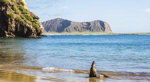 Galapágy: Ostrovy podivných zvířat