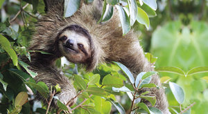 Vynalézaví lenochodi: Hadí triky šetří energii