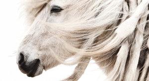 Vědecky potvrzeno: Kůň nám rozumí