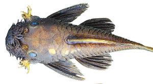 Nový objev: Rybí superhrdinové