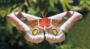 Neviditelné můry: Jak se ukrýt před netopýrem