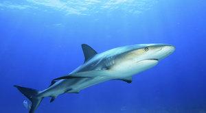 Kdy a proč útočí žraloci