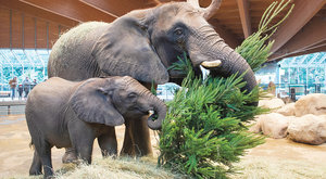 Posuvné zuby: Sloní recept na štíhlou linii