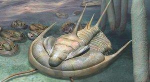 Král fosilií: Tyranosaurus rex mezi trilobity