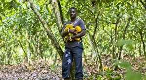 Kakaovník: Ragbyový míč s chutí pomerančového džusu