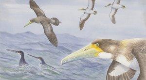 Nový zvířecí objev: Zubatý mořský pták