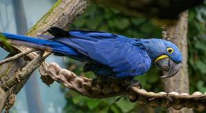 Zoo Praha otevřela nový svět papoušků