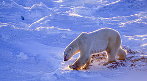 Záhady permafrostu: Co skrývá věčně zmrzlá půda?