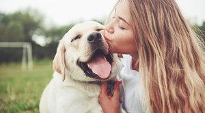 Mourrisonova poradna: Milujeme zvířata