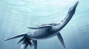 Nový objev: Plesiosauři žili jako delfíni