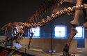 Kostra dospělého rapetosaura