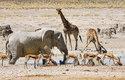Poušť není mrtvá - přežijí tu dokonce i tak velká zvířata, jako jsou sloni