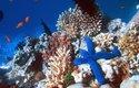 Nejslavnějším korálovým útesem je Velký bariérový útes u pobřeží Austrálie. Takto vypadá pod vodou