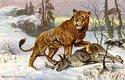 Lev jeskynní s uloveným srncem