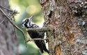 Birdwatching: Mám dalekohled a čas. Víc nepotřebuji