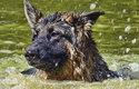 Ovčáčtí psi jsou vycvičeni k tomu, aby dokázali manipulovat se stádem