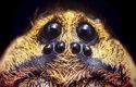 Pavouci slíďáci patří Mezi největší druhy pavoukům