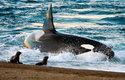 Evoluce pravěkých velryb