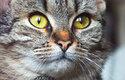 Dnes jsou kočky spíš domácí mazlíčci a milí společníci