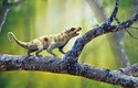 Vážky lovili už první savci. Jedním z nich byl Ptilodus, který žil v Severní Americe před 66 miliony lety
