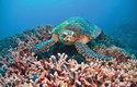 Korálový útes je domovem nejen mořských želv, ale také mnoha ryb a bezobratlých živočichů