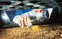 Farma pro chov cvrčků podléhá přísným hygienickým normám