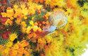 Neopatrnou medúzu koráli přidrží za zvon a hned začnou polykat její chapadla
