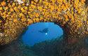 Koráli dendrofyly často pokrývají stropy podmořských jeskyní