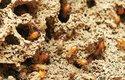 Termiti jsou jednou znejstarších skupin hmyzu