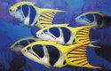 415 milionů let starý rybovitý obratlovec z mělkých moří připomíná některé dnešní korálové ryby