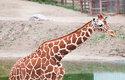 První holka a první kluk z každé kategorie závodů v Brně půjdou krmit žirafy!