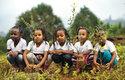 V africké Etiopii se podařilo po celé zemi zasadit během 12 hodin přes 350 milionů nových stromů