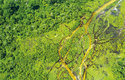 Letecký pohled na deštný prales v Kongu
