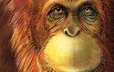 Moderní rekonstrukce gigantopitéka, která vychází z jeho příbuznosti s orangutany