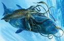 Jediným přirozeným nepřítelem dospělých krakatic je vorvaň, který se za nimi potápí do obrovských hloubek