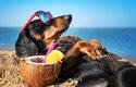 Mourrisonova poradna: Co dělat o prázdninách