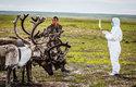 Veterinář kontroluje stádo sobů během výskytu antraxu
