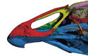 Lebka asteriornise je jakousi kombinací lebek dnešních slepic a kachen
