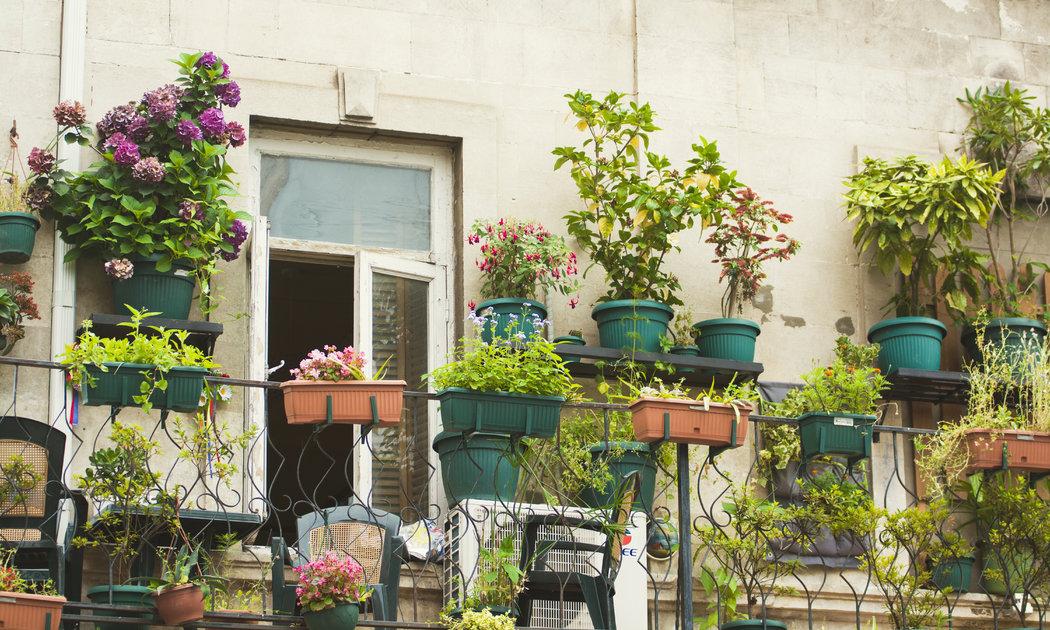 Kvety pristanú každému balkónu. Vytvorte si záhradu z byliniek, ktoré zužitkujete pri varení a pokojne na balkóne pestujte rajčiny či jahody.
