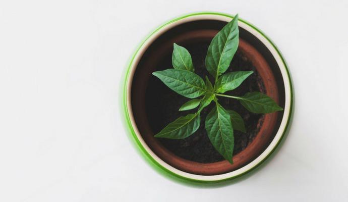 Rostlinu nejdřív zasaďte do květináče a ten schovejte do dekorativního obalu.