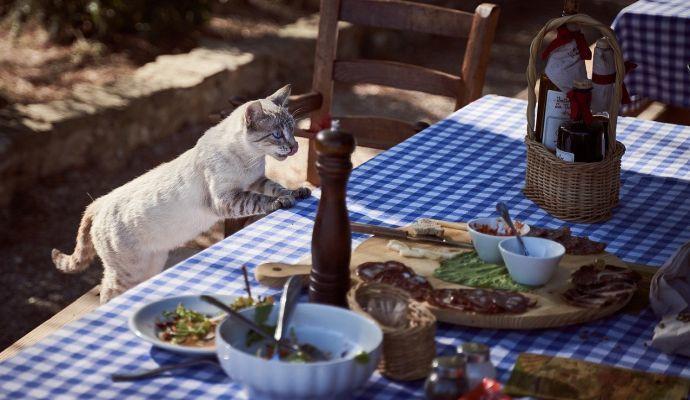 Kočka slídící na jídelním stole má zaděláno na zdravotní problémy.