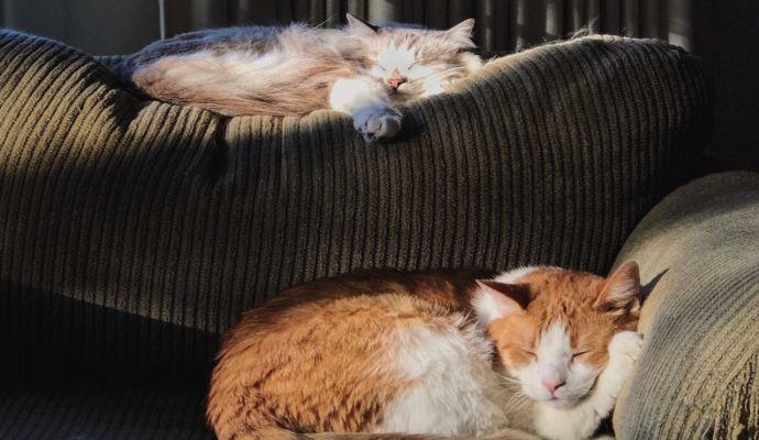 Kočky jsou líná stvoření, a proto letargii snadno zaměníte za pouhé lenošení. Letargickou kočku poznáte tak, že nereaguje ani v situacích, kdy je obvykle čilá.