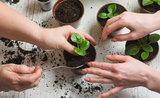 Zjistěte, jak správně přesazovat pokojové rostliny