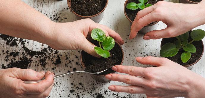 Jak správně přesazovat pokojové rostliny