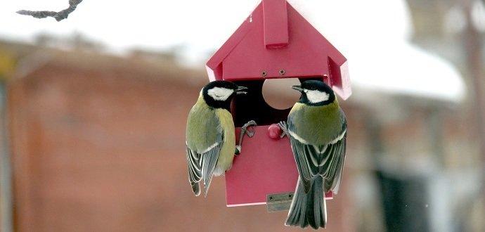 Krmné směsi pro velké papoušky. Napáječky pro ptáky.